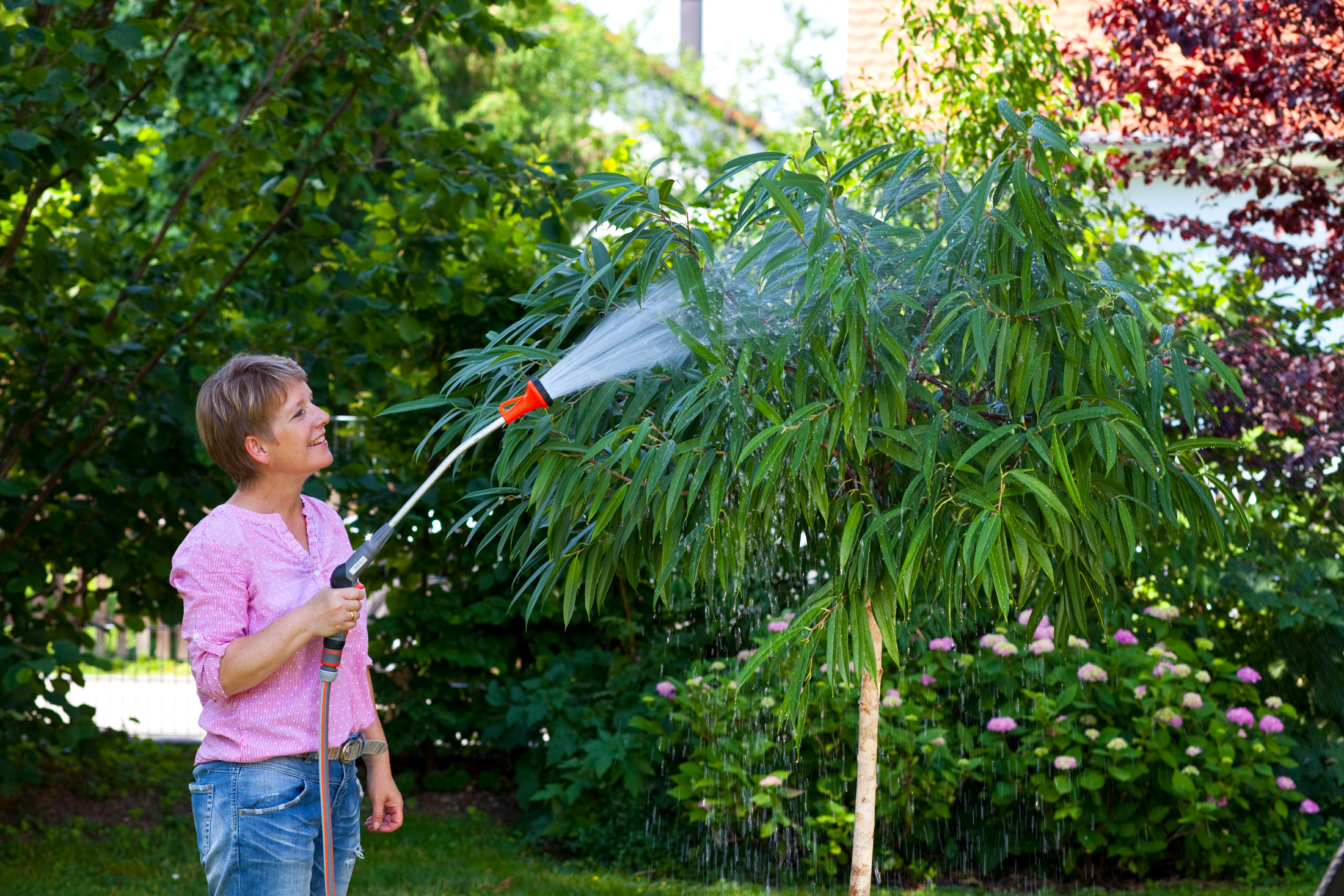 Sommerfrische für Zimmerpflanzen