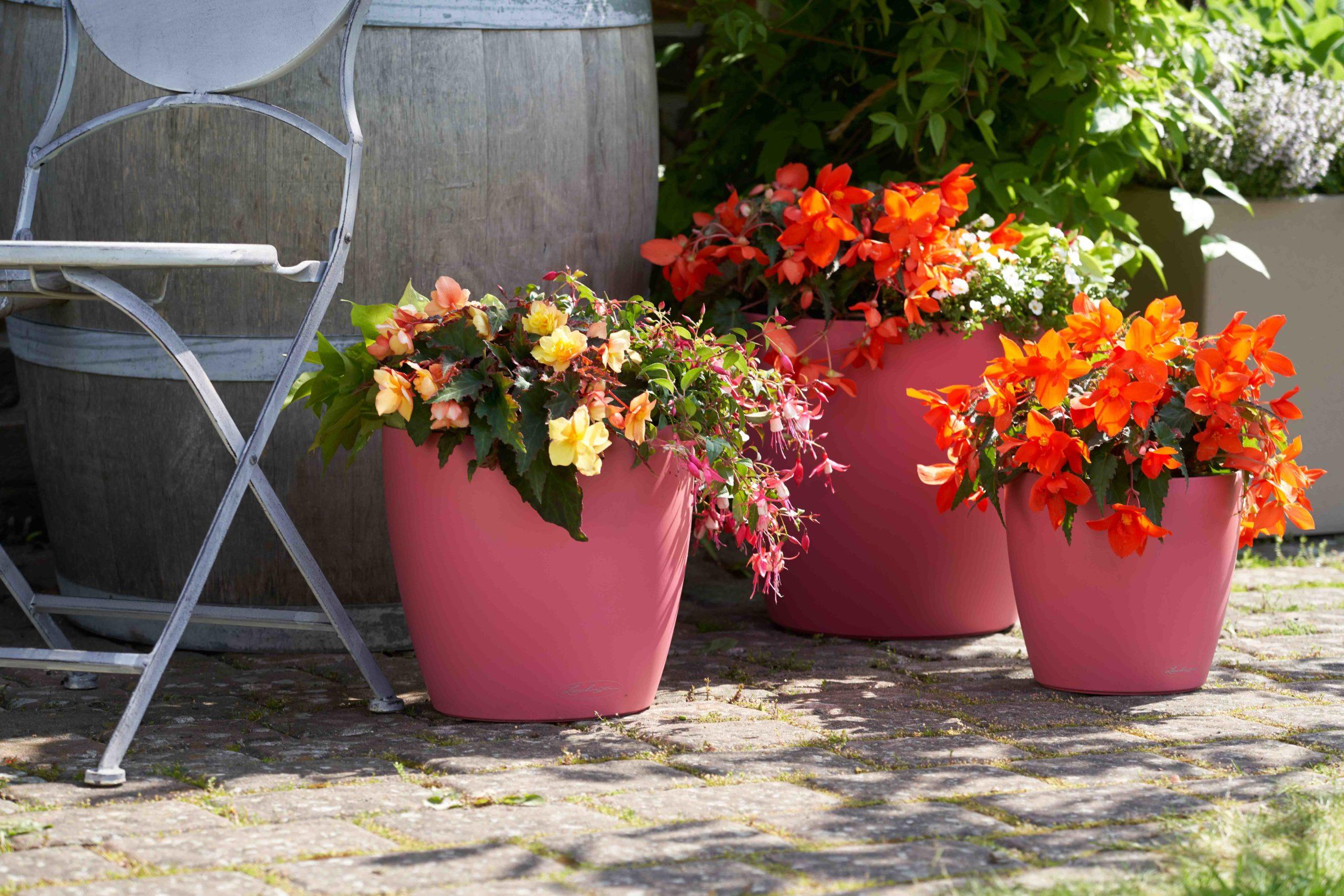 Sommerblumen wie Begonien und Fuchsien in Töpfen lieben den Halbschatten.